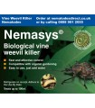 Nemasys Vine Weevil Killer Nematodes - 100m2
