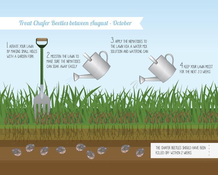 Chafer Grub Treatment